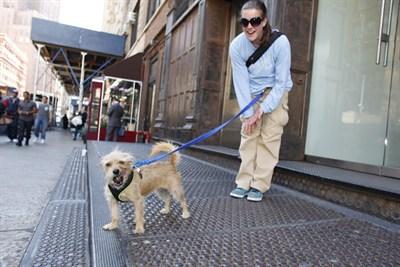 dog_tb_on_walk_400x267