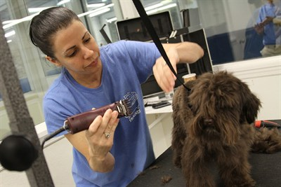 Nyc dog grooming enoy our quality guarantee biscuits for A bath and a biscuit grooming salon