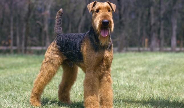 Dog Breeds | Biscuits & Bath