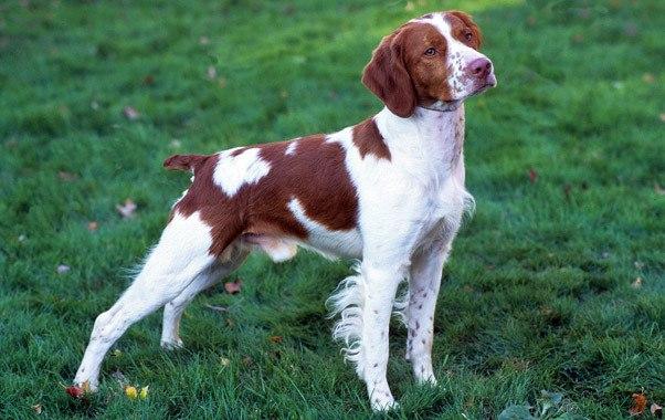 Barking Dog And Quality Of Life