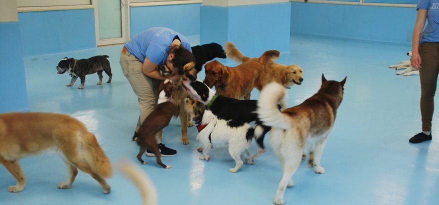Posts Tagged  dog walker dog walker Archives   Biscuits   Bath. Dog Walkers Bath Area. Home Design Ideas